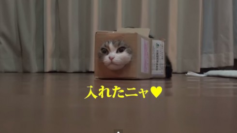 箱とねこ18。 Box and Maru18.    YouTube
