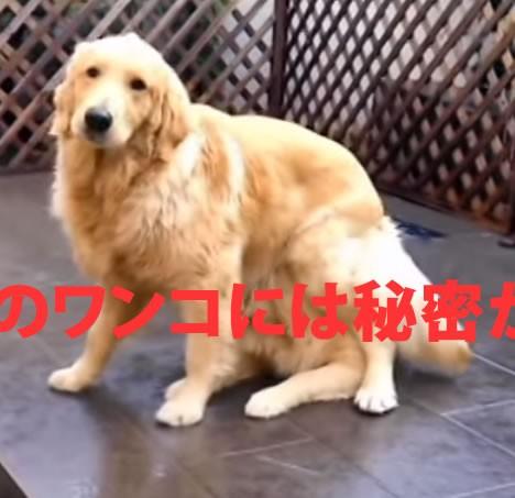 Magic dog   YouTube