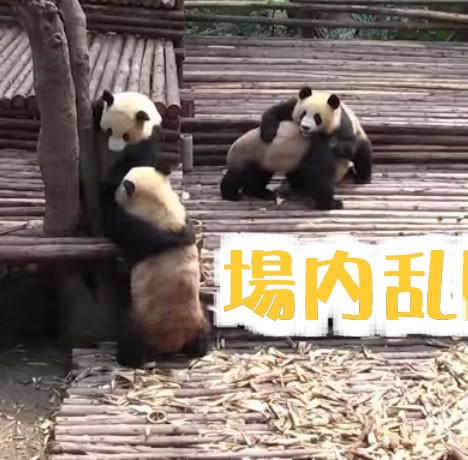 NAUGHTY PANDAS PLAY GROUP FIGHTS  CUTE TROUBLE MAKERS  PART I   YouTube