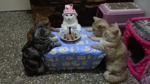 龍媽六寶   蘿莉公主過生日   YouTube