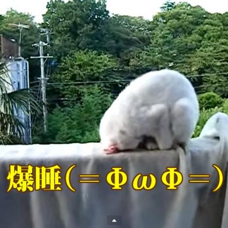 猫が土下座しながら寝てた   YouTube