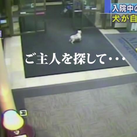 米で話題に 飼い主が入院中の病院に犬が現れる 15 02 14    YouTube