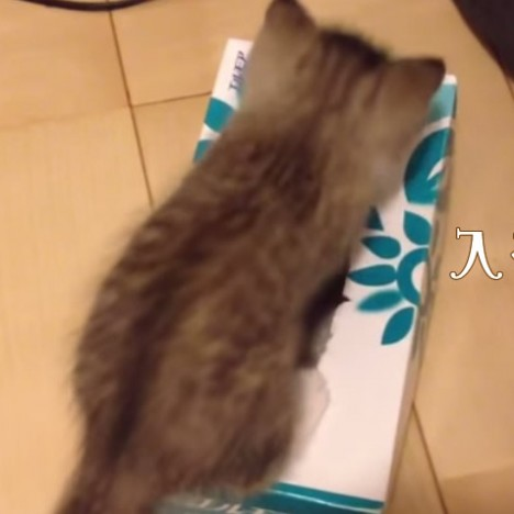 衝撃... 子猫の下に何が!? Surprised  Something is under the kitten     YouTube