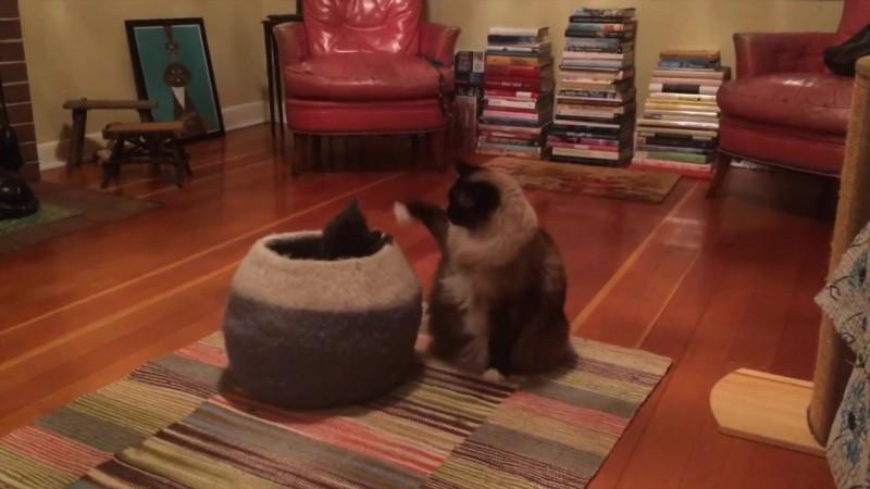 03-壺型のキャットハウスから飛び出す仔猫! 勢いよく飛び出すも・・・
