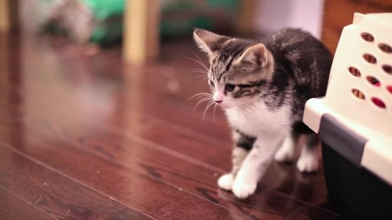 04-子ネコさんとハリネズミ。まだちょっとお互いが怖いけど友だちになれるかな?