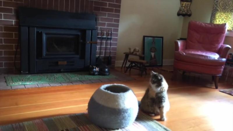 08-壺型のキャットハウスから飛び出す仔猫! 勢いよく飛び出すも・・・