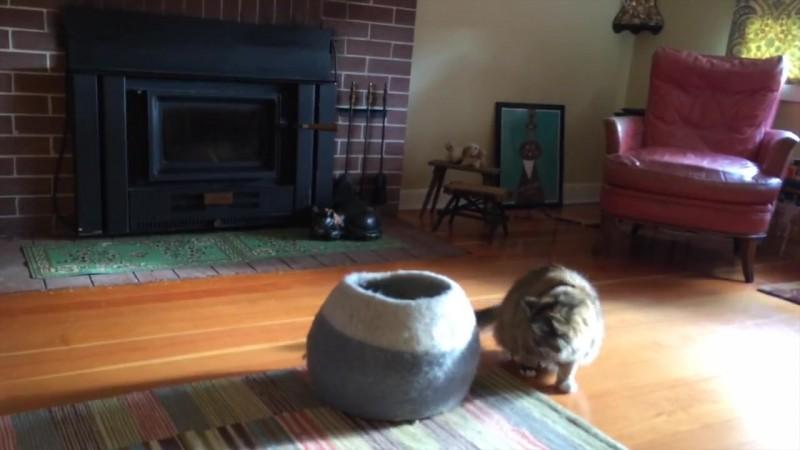 06-壺型のキャットハウスから飛び出す仔猫! 勢いよく飛び出すも・・・