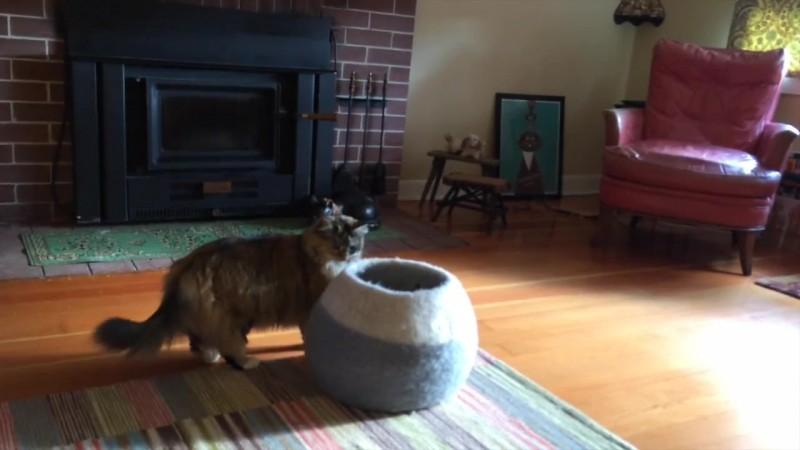 04-壺型のキャットハウスから飛び出す仔猫! 勢いよく飛び出すも・・・