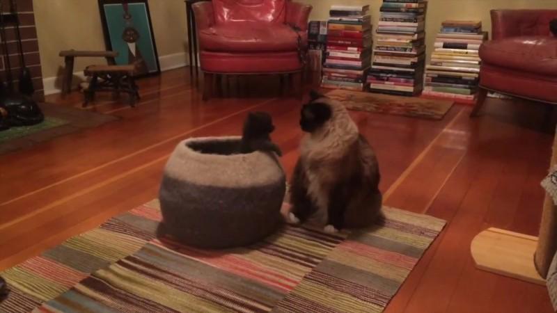 02-壺型のキャットハウスから飛び出す仔猫! 勢いよく飛び出すも・・・