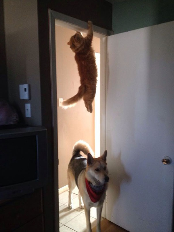 perfectly-timed-cat-photos-100__605