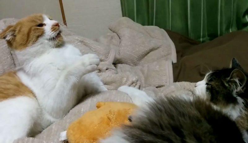 03「一体何があったの?!」喧嘩中になにかを悟り落ち込むネコさんに笑いが止まらない!