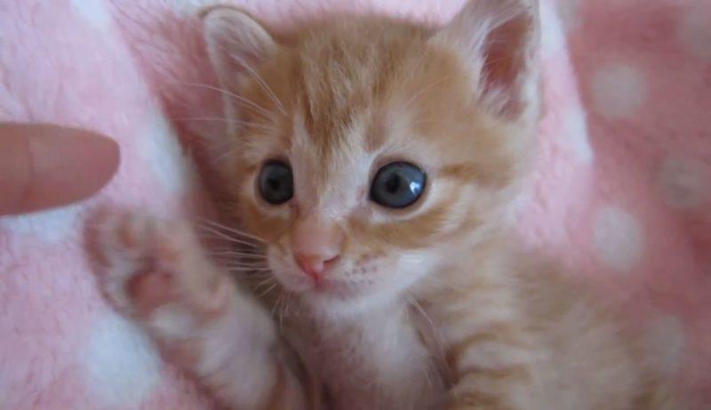 01「まさに天使そのもの♪」子ネコさんのうるうるした瞳にココロを奪われる♥