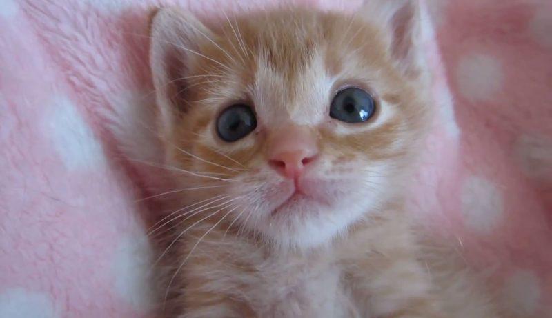 02「まさに天使そのもの♪」子ネコさんのうるうるした瞳にココロを奪われる♥