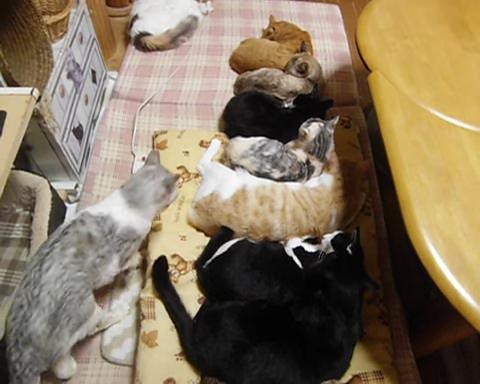 01-お行儀よく並んで寝ているネコさんたちそこへ送れてやって来たヤツが・・・