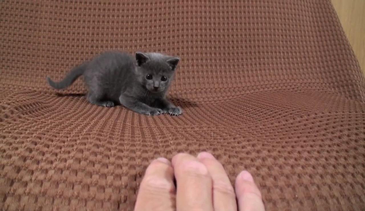 03つぶらな瞳があまりにもかわいい♪寄って来ては離れる子ネコさんに見れば見るほど惹き込まれる!