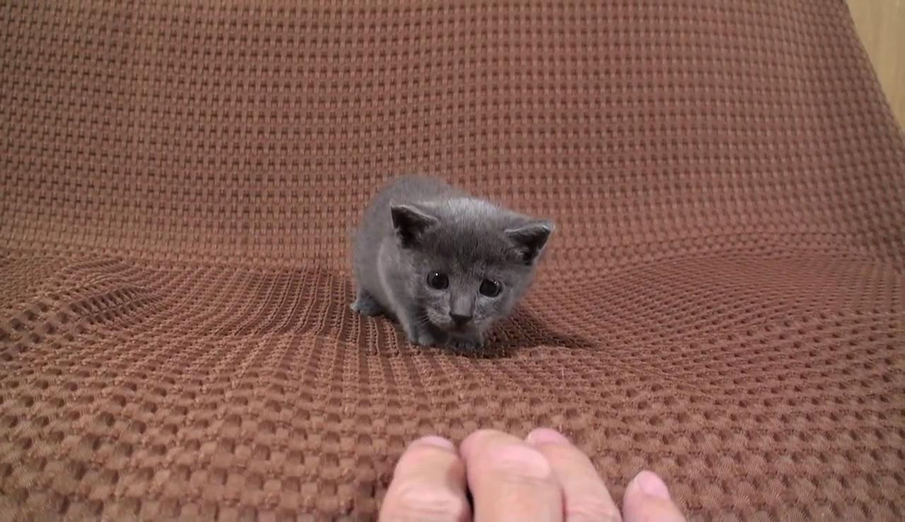 01つぶらな瞳があまりにもかわいい♪寄って来ては離れる子ネコさんに見れば見るほど惹き込まれる!