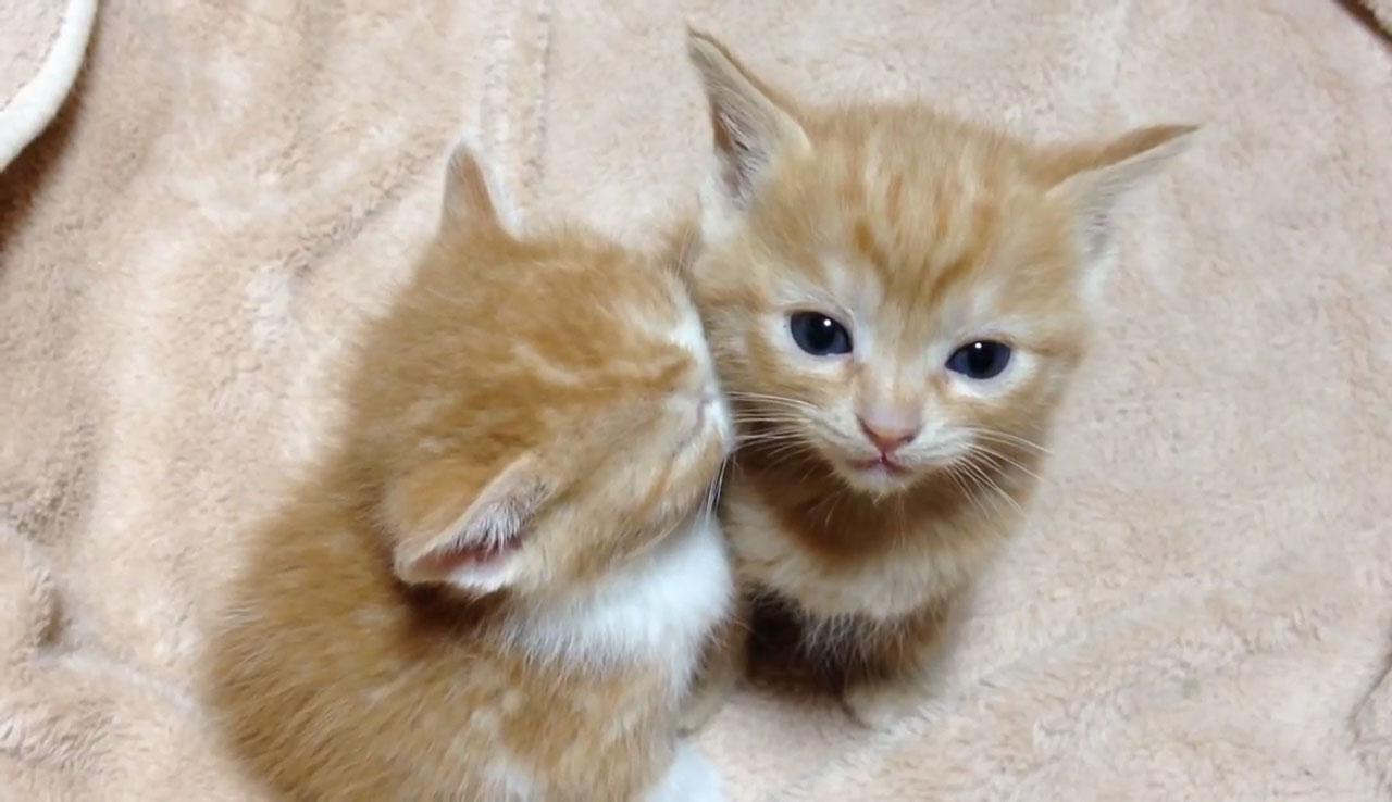01ウトウト・・・。寄りかかって熟睡する隣の子ネコさんのためにがんばって起きていようとする子ネコさんの優しさにキュンとする!