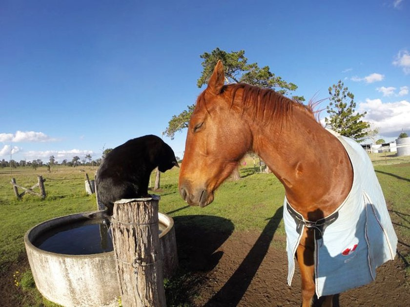 cat-morris-horse-champy-animal-friendship-2