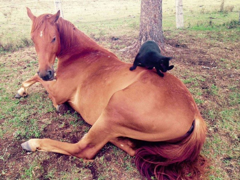 cat-morris-horse-champy-animal-friendship-3
