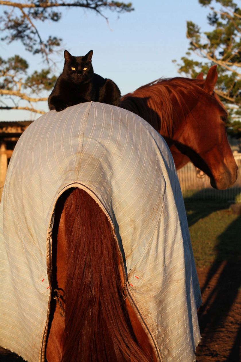 morris-the-horse-riding-cat__880