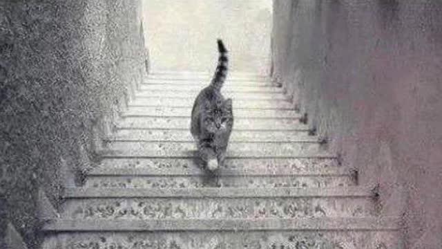 この猫は階段を降りてますよね?人によっては登っているように見えるそうです。