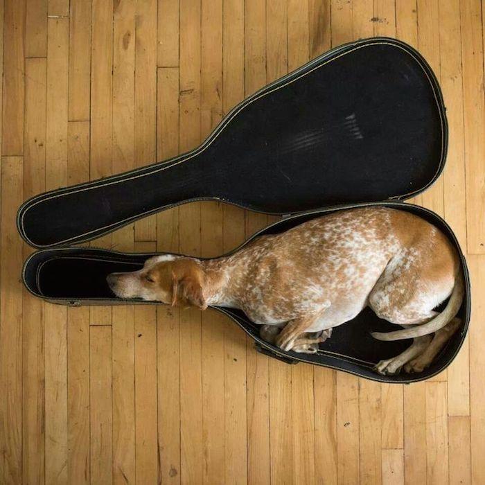 sleepdog13-ShuF
