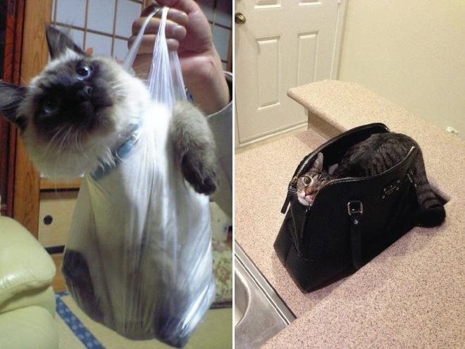 cat-bag14