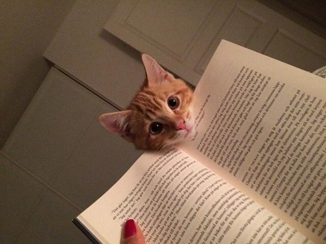 reading-pets1