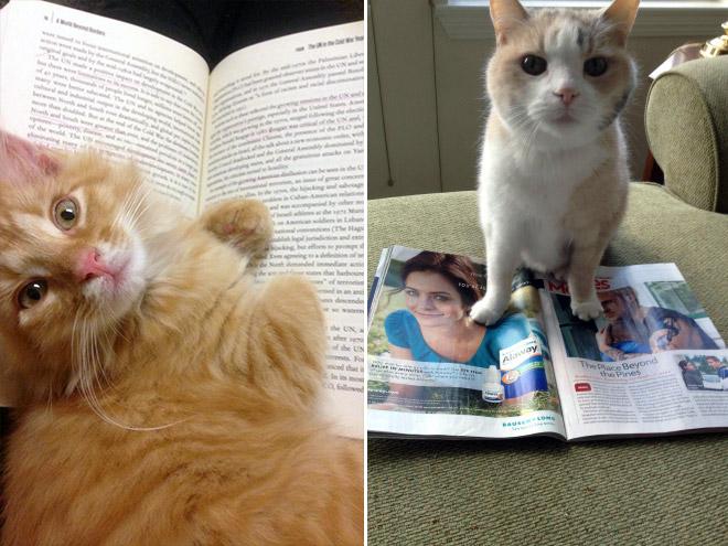 reading-pets18
