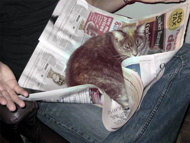 reading-pets6