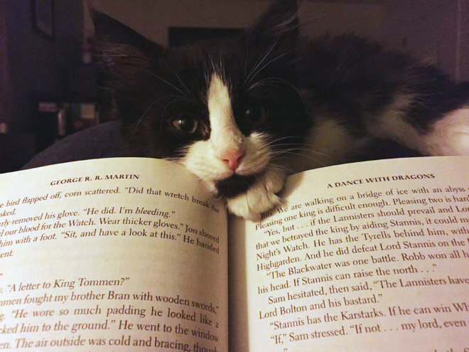 reading-pets9