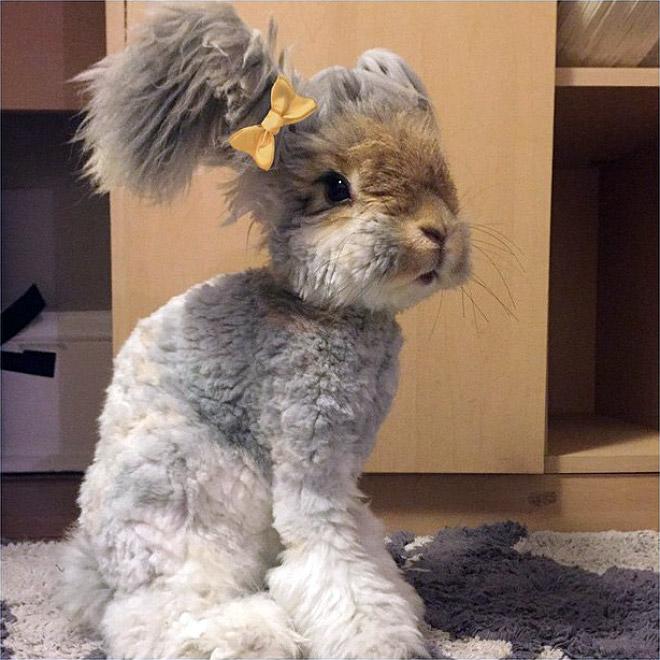 bunny9