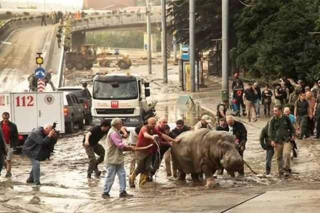 flooding_causes_zoo_animals_flee_the_tbilisi_zoo_04