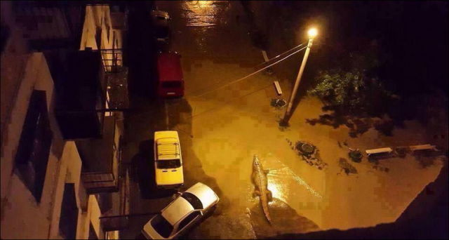 flooding_causes_zoo_animals_flee_the_tbilisi_zoo_20