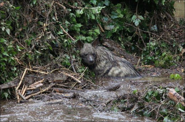flooding_causes_zoo_animals_flee_the_tbilisi_zoo_22
