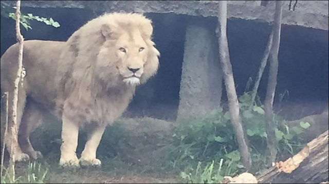 flooding_causes_zoo_animals_flee_the_tbilisi_zoo_dOvWW_18