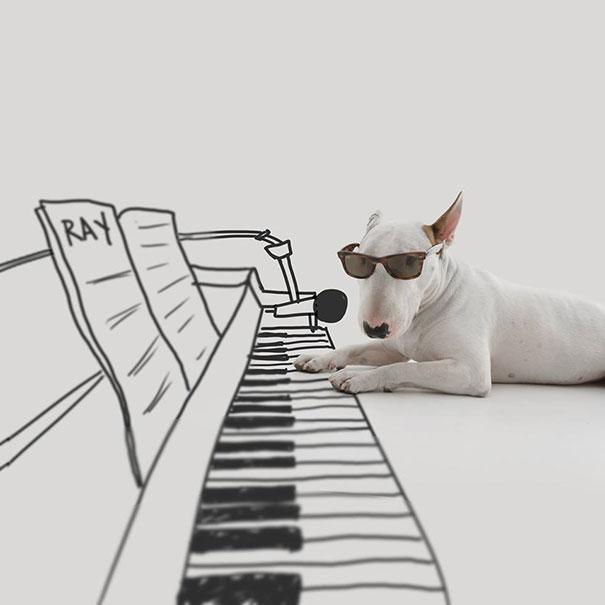 Jimmy-the-Bull-Terrier10__605