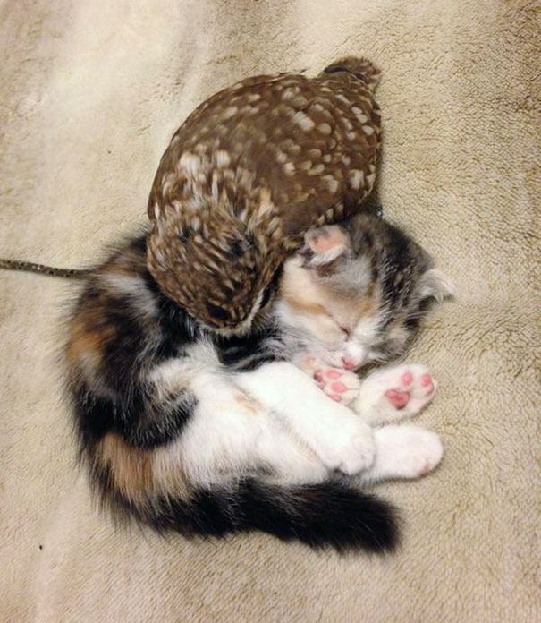 kitten-owl-best-friends-fuku-marimo-hukulou-coffee-japan-62