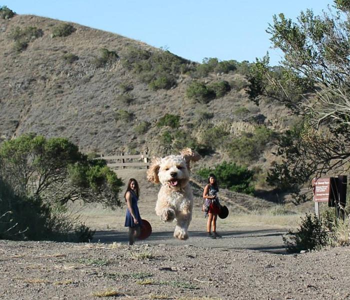 optical-illusion-giant-dogs-21__700