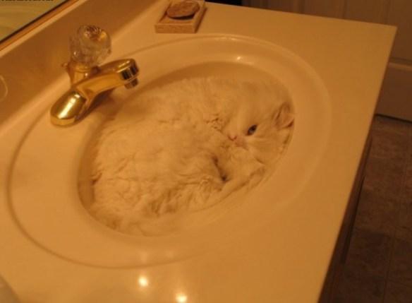 猫はかくれんぼの達人! 猫の模様はちゃんと意味があります。02