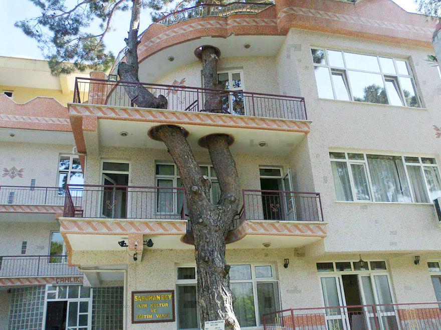 architecture-around-the-trees-1__880