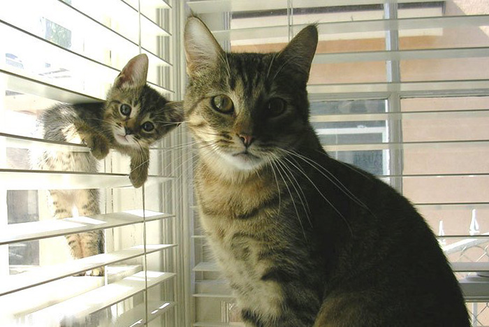cat-and-mini-me-counterpart-16__700