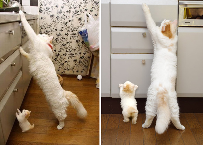 cat-and-mini-me-counterpart-391__700