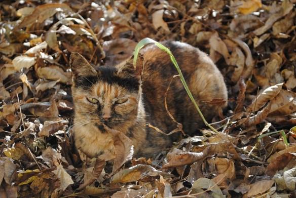 猫はかくれんぼの達人! 猫の模様はちゃんと意味があります。07