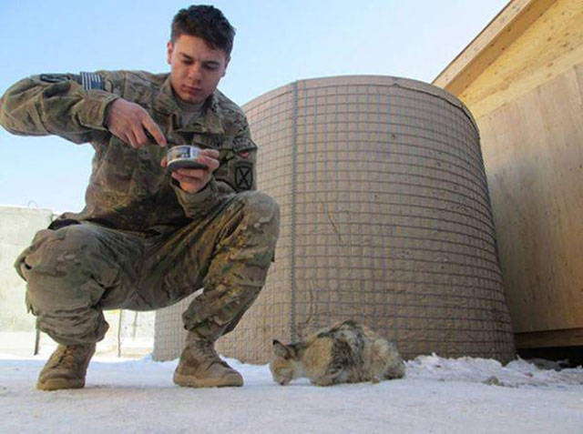 soldiers_share_some_bonding_time_with_cats_640_05