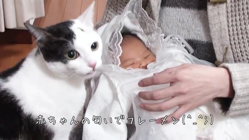 赤ちゃんとの初めての出会い。ネコの反応は?04