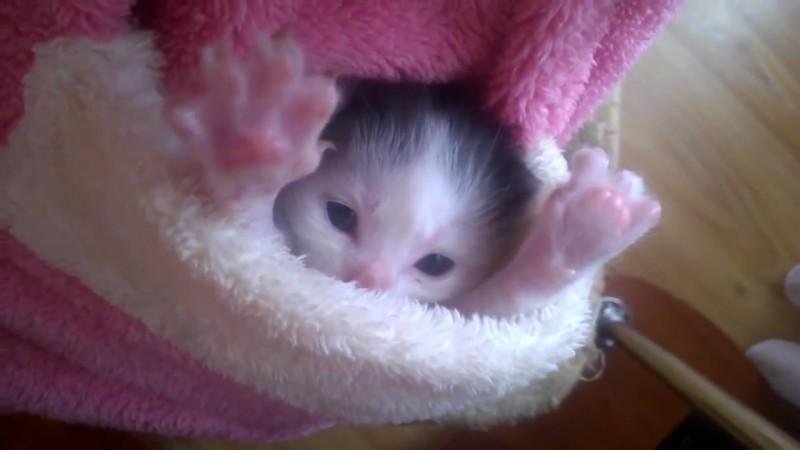 まだちっちゃな赤ちゃん猫。その仕草にキュン01