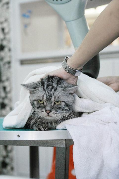 12-お風呂が嫌いな猫の不機嫌な写真15枚