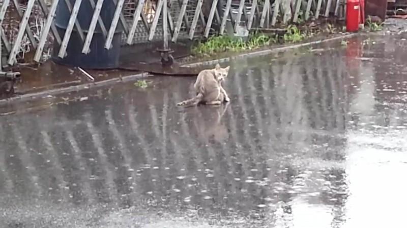 02-「急げ急げ〜!」雨のなか仔猫をくわえて急いでおうちへ帰るお母さん猫