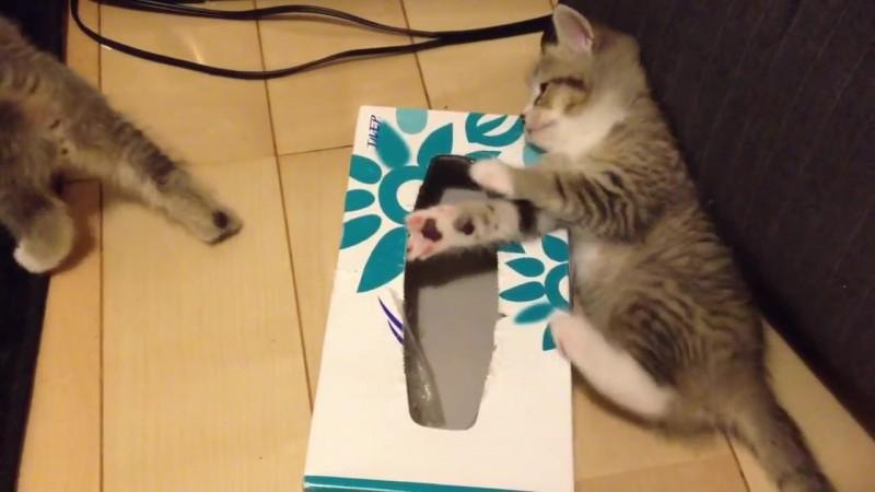 ティッシュ箱の中に入りたい〜。なかなか入れない仔猫、その理由とは?07